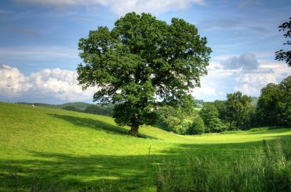 Najpiękniejsze europejskie drzewa – dąb