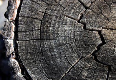 Cena drewna – dlaczego jest taka wysoka?